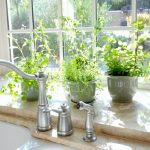 Growing Plants for the Kitchen Garden
